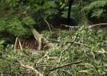 Tree Falls in Yellow Creek Park, Bridge Destroyed (Photos)
